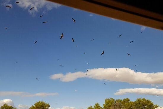 Buitres en el cielo