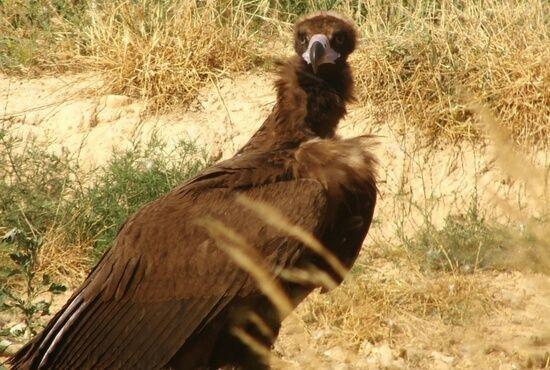 Turismo Ornitologico en Teruel