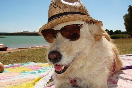 Actividades para perros Bajo Aragon