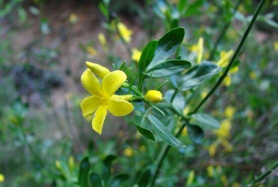 Flores del Bajo Martin