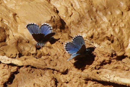 Libando sales minerales en Valdoria