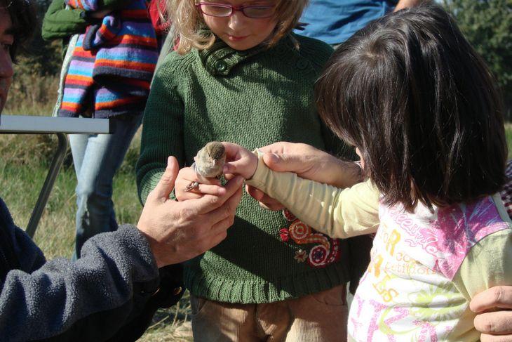 Organizando anillamientos científicos con SEO/BirdLife 2007